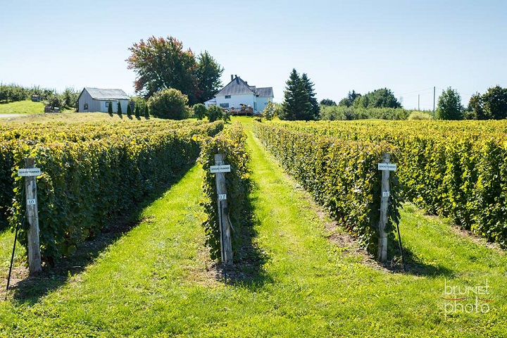 Route des Vignobles ,Visite vignoble ,Vignoble Union Libre ,Vignobles ,Dunham ,Estrie ,Cantons de l'Est