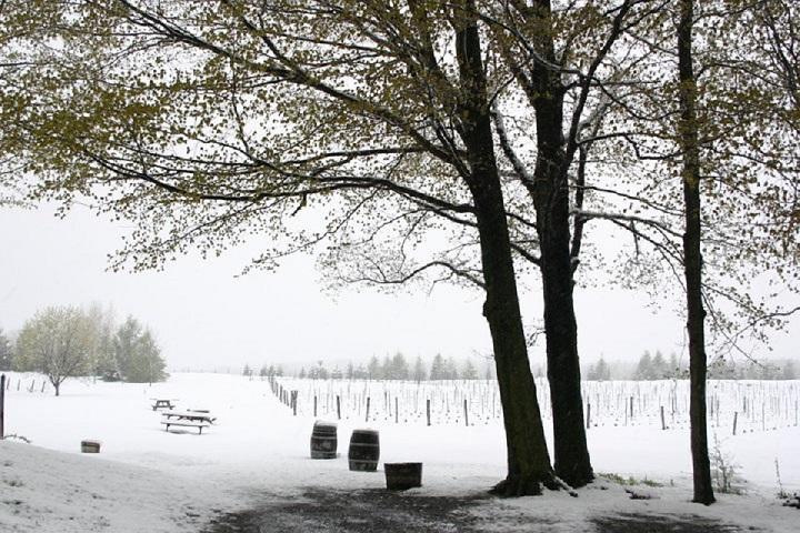 Visite de vignobles La Mission Cantons-de-l'Est
