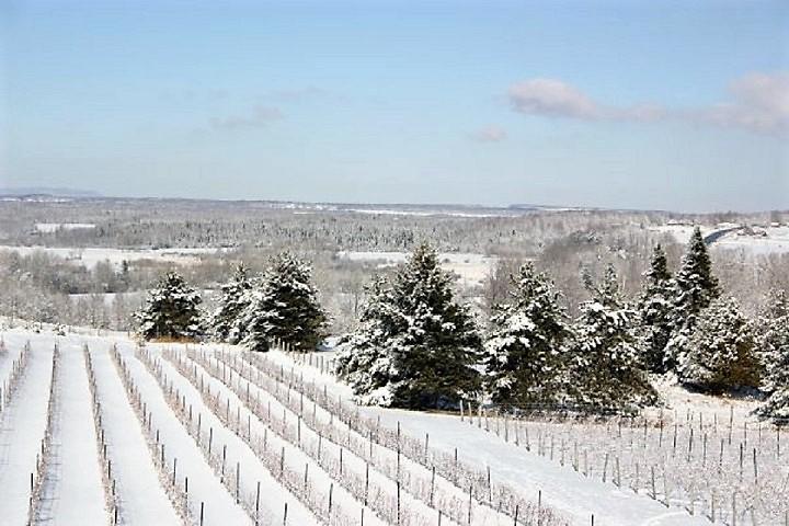 Vignoble La Mission tourisme du vin – zone viticole Brigham - Farnham Cantons de l'Est
