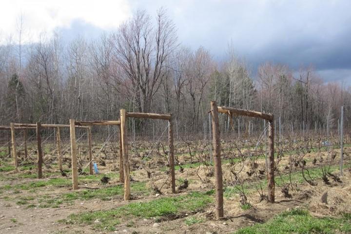 Visite de vignoble Les Pervenches Cantons-de-l'Est