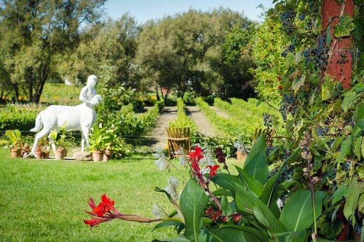 Visite du vignoble Centaure Cantons de l'Est