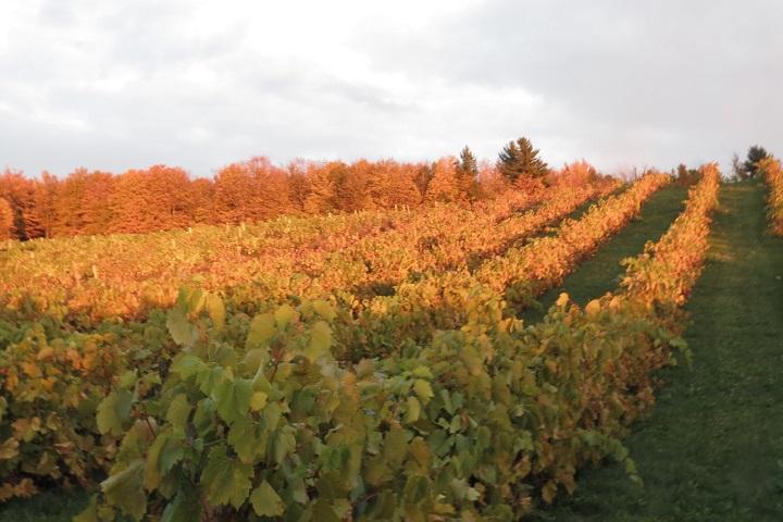 Visite de vignobles Domaine des Côtes d'Ardoise Cantons de l'Est