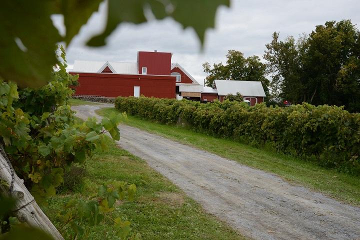 Route des Vignobles ,Visite vignoble ,Vignoble Gagliano ,Vignobles ,Dunham ,Estrie ,Cantons de l'Est