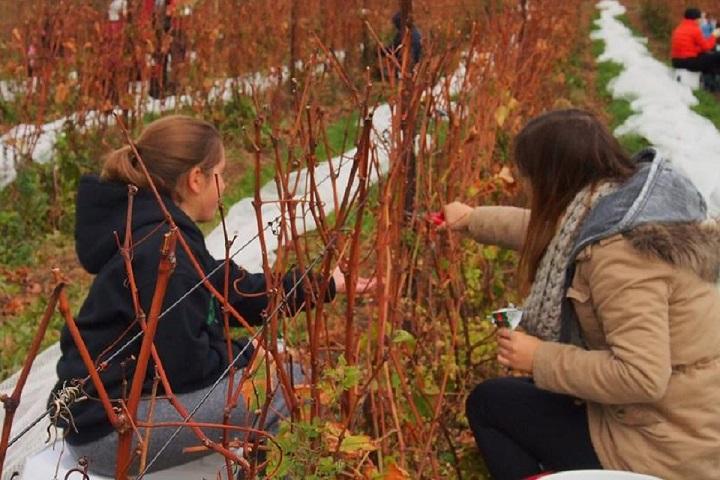 Visite de vignobles La Grenouille Cantons-de-l'Est