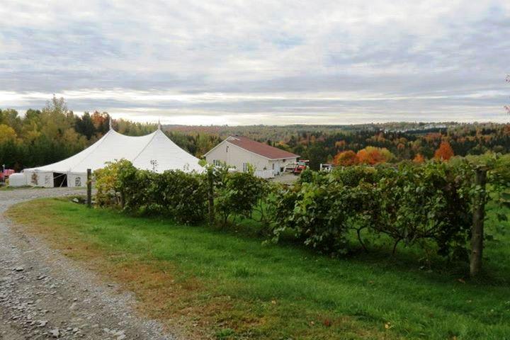 Visite de vignobles Halte des Pèlerins Cantons-de-l'Est