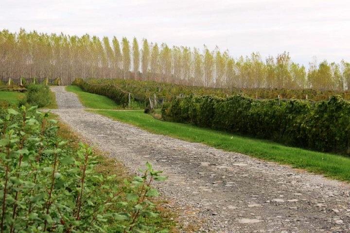 Visite vignoble, vignoble Halte des Pelerins, domaines viticoles ,Sherbrooke ,Estrie ,Cantons de l'Est ,Vignoble ,Meilleurs restaurants ,hebergement ,a proximite