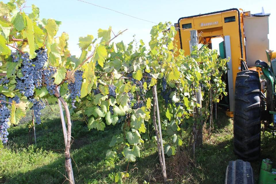 Vignoble de la Bauge tourisme du vin – zone viticole Brigham – Farnham Cantons de l'Est
