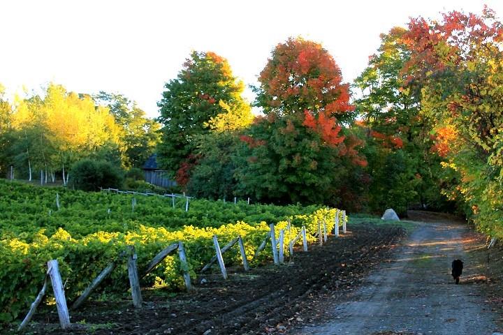 Route des Vignobles ,Visite vignoble ,Vignoble de l'Ardennais ,Vignoble ,domaines viticoles ,Cantons de l'Est