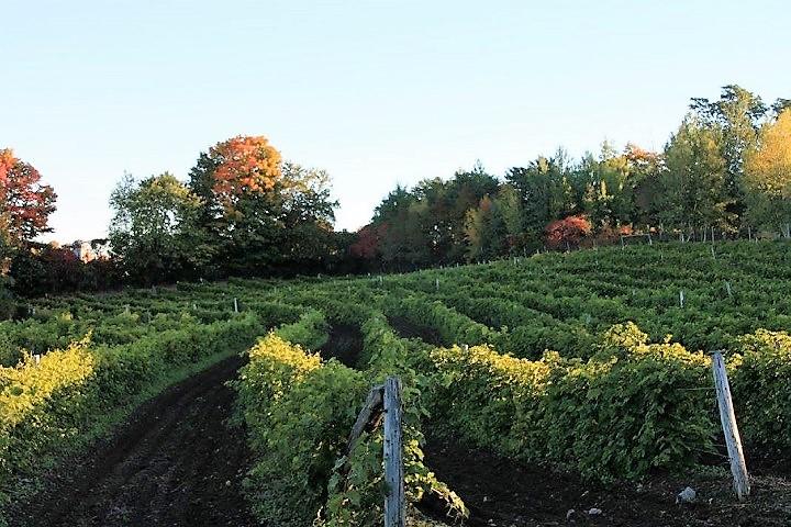 Vignoble de l'Ardennais ,Visite Vignoble ,Vignoble ,Stanbridge ,domaines viticoles ,Estrie ,Cantons de l'Est ,Meilleurs restaurants ,hebergement ,