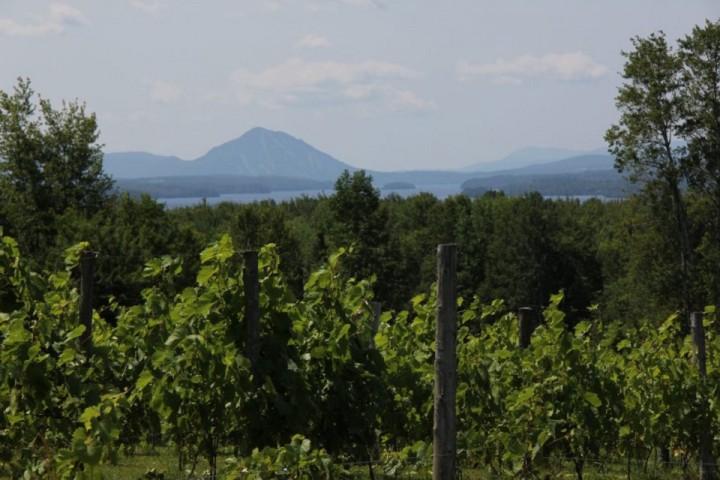 Visite vignoble ,vignoble Orford ,Vignoble ,domaines viticoles ,Orford ,Estrie ,Cantons de l'Est ,Vignoble ,Meilleurs restaurants ,hebergement ,a proximite