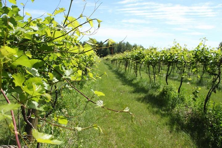 PIGEON HILL ,Visite vignoble ,vignoble Pigeon Hill ,Vignoble ,domaines viticoles ,Cantons de l'Est ,Vignoble ,Meilleurs restaurants ,hébergement ,