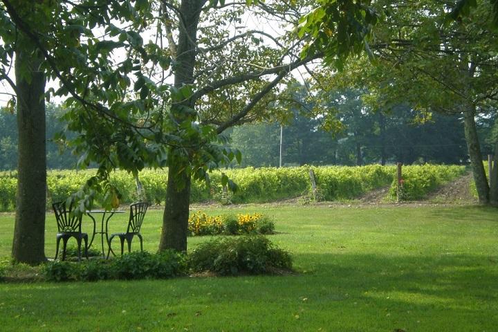 Visite vignoble ,vignoble Domaine du Ridge ,Vignoble ,domaines viticoles ,St-Armand ,Estrie ,Cantons de l'Est ,Vignoble ,Meilleurs restaurants ,hebergement ,a proximite ,
