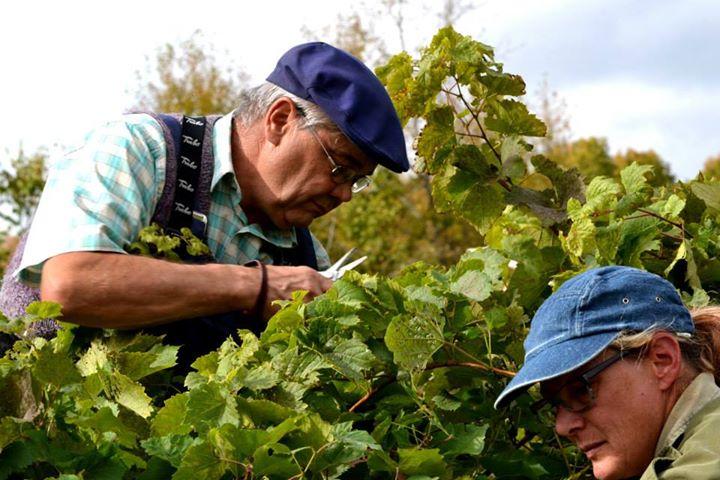 Du Ridge ,Visite vignoble ,vignoble Domaine du Ridge ,Vignoble ,domaines viticoles ,St-Armand ,Estrie ,Cantons de l'Est ,Vignoble ,Meilleurs restaurants ,hebergement ,a proximite ,