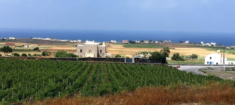 Domaine Sigalas domaine viticole Santorini