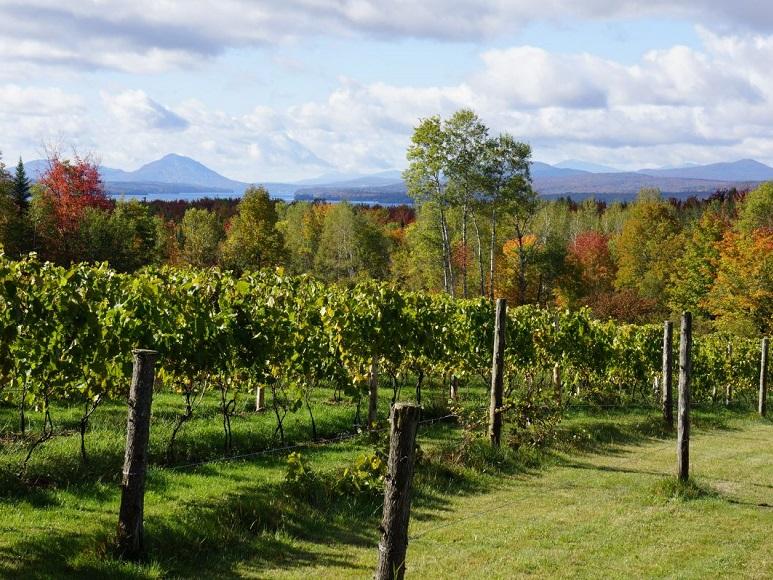 Top 10 vignobles à visiter Cantons de l'Est Sélection VINDICI