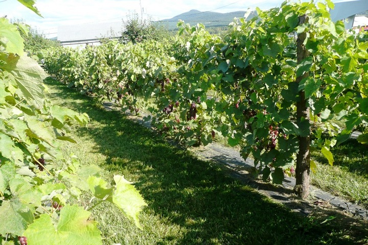 Visite vignoble ,vignoble Val Caudalies ,Vignoble ,domaines viticoles ,Dunham ,Estrie ,Cantons de l'Est ,Vignoble ,Meilleurs restaurants ,hebergement ,a proximite ,