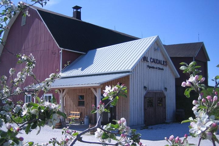 Route des Vignobles ,Visite vignoble ,Vignoble Val Caudalies ,Vignobles ,Dunham ,Estrie ,Cantons de l'Est