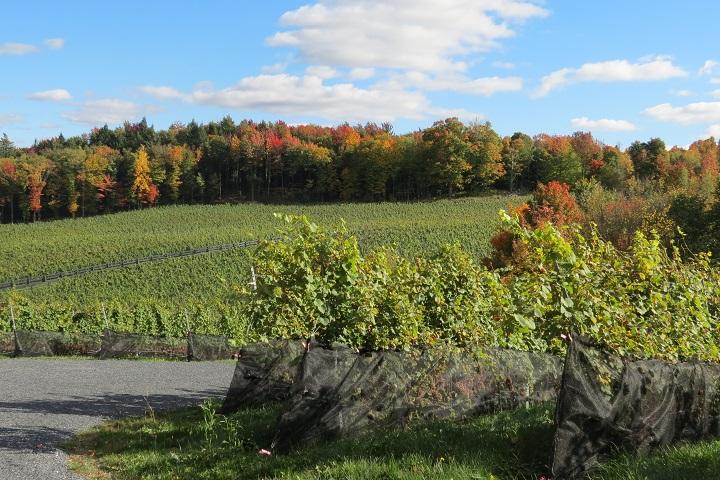 Vignoble du Ruisseau tourisme du vin – zone viticole Dunham – St-Armand Cantons de l'Est