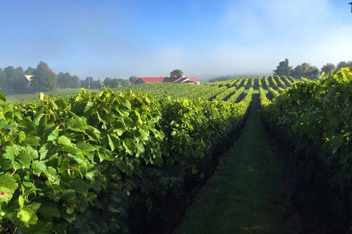 Route des Vignobles ,Visite vignoble ,Vignoble Les Vallons de Wadleigh ,Vignobles ,Ulverton ,Estrie ,Cantons de l'Est,plus près ,à proximité