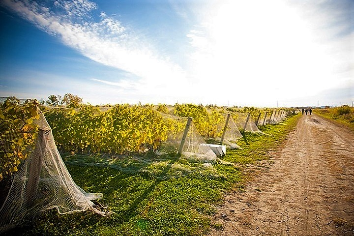 Vignoble Domaine Du Fleuve ,oenotourisme ,visite de vignobles ,cépages ,dégustation ,Montérégie, Sélection Vindici ,Sud du Québec ,