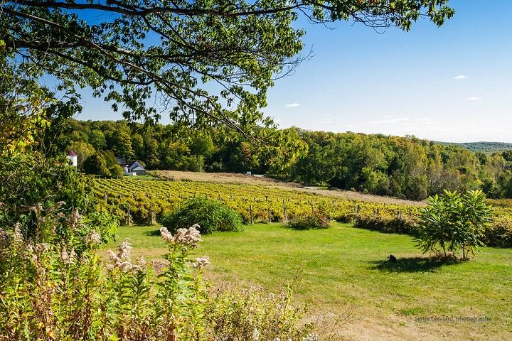 Vignoble d'Oka ,oenotourisme ,visite de vignobles ,cépages ,dégustation ,Basses-Laurentides , Sélection Vindici ,Sud du Québec ,