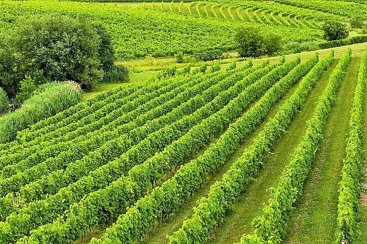 Vignoble Château Fontaine ,oenotourisme ,visite de vignobles ,cépages ,dégustation ,Montérégie, Sélection Vindici ,Sud du Québec ,