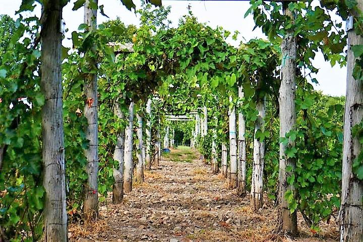 Vignoble du Marathonien ,oenotourisme ,visite de vignobles ,cépages ,dégustation ,Montérégie, Sélection Vindici ,Sud du Québec ,