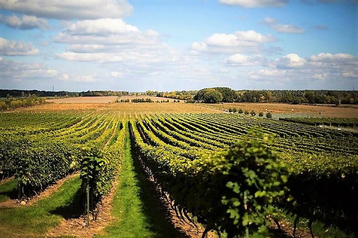 Vignoble Vents d'ange ,oenotourisme ,visite de vignobles ,cépages ,dégustation ,Montérégie, Sélection Vindici ,Sud du Québec ,