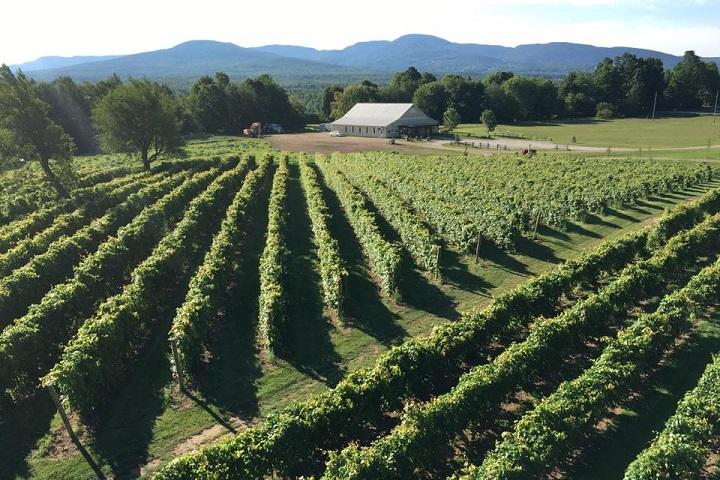 Vignoble Bresee ,oenotourisme ,visite de vignobles ,cépages ,dégustation ,Cantons de l'Est, Estrie ,Sélection Vindici ,Sud du Québec ,