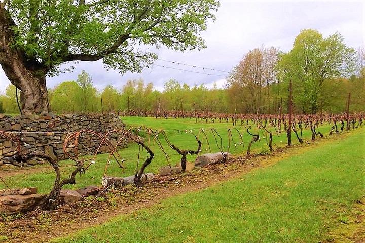 Vignoble Château de Cartes ,oenotourisme ,visite de vignobles ,cépages ,dégustation ,Cantons de l'Est ,Estrie ,Sélection Vindici ,Sud du Québec ,