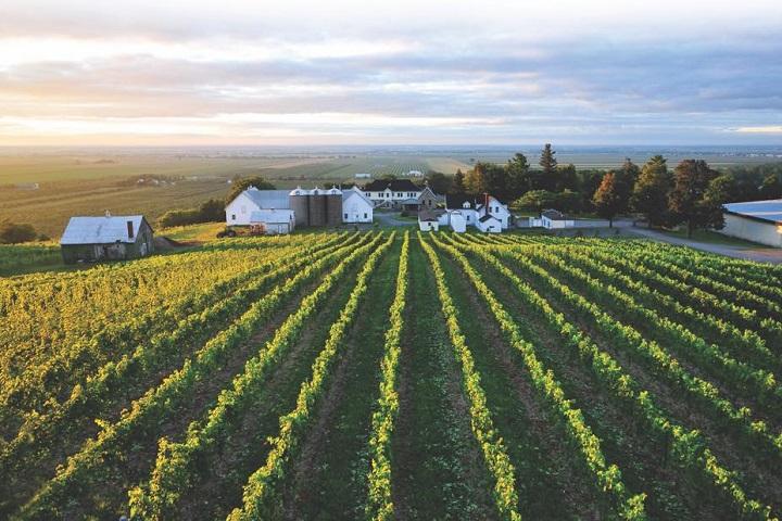 Vignoble Coteau Rougemont ,oenotourisme ,visite de vignobles ,cépages ,dégustation ,Montérégie, Sélection Vindici ,Sud du Québec ,