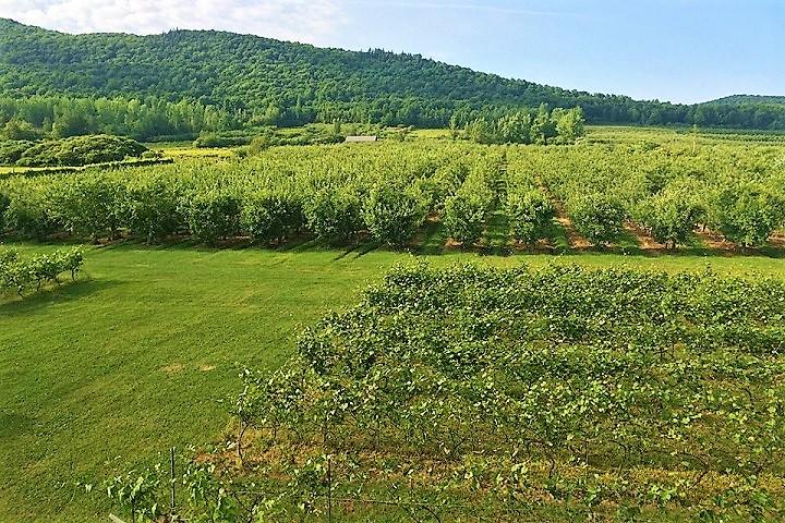 Vignoble Coteau St-Paul ,oenotourisme ,visite de vignobles ,cépages ,dégustation ,Montérégie, Sélection Vindici ,Sud du Québec ,