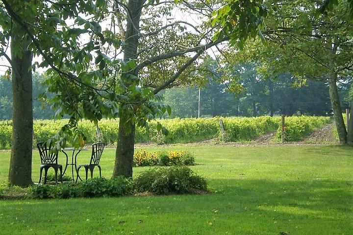 Vignoble du Ridge ,oenotourisme ,visite de vignobles ,cépages ,dégustation ,Cantons de l'Est, Estrie ,Sélection Vindici ,Sud du Québec ,