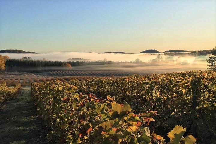 Vignoble Fragments ,oenotourisme ,visite de vignobles ,cépages ,dégustation ,Outaouais, Sélection Vindici ,Sud du Québec ,