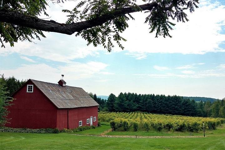 Vignoble Grange Hatley ,oenotourisme ,visite de vignobles ,cépages ,dégustation ,Cantons de l'Est ,Estrie , Sélection Vindici ,Sud du Québec ,