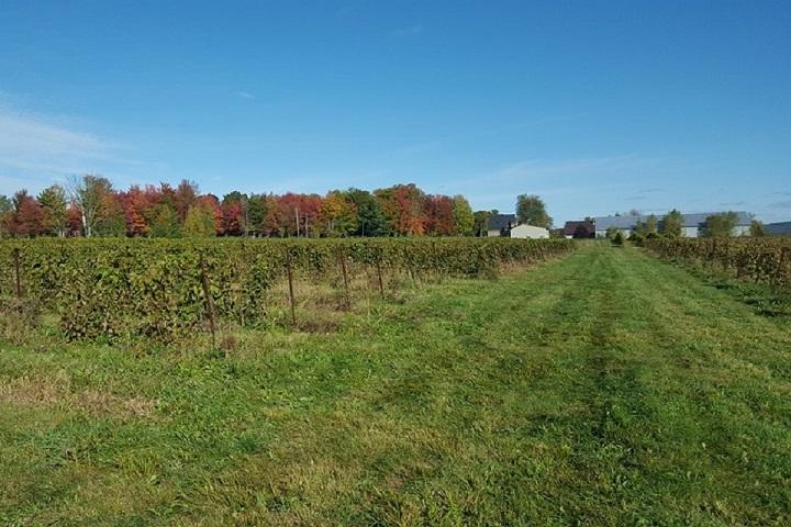 Vignoble La Grenouille ,oenotourisme ,visite de vignobles ,cépages ,dégustation ,Cantons de l'Est, Estrie ,Sélection Vindici ,Sud du Québec ,
