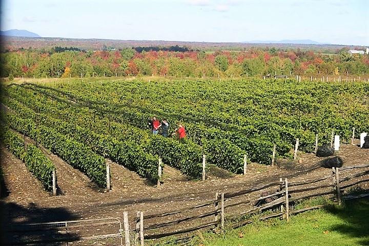 Vignoble La Mission ,oenotourisme ,visite de vignobles ,cépages ,dégustation ,Cantons de l'Est ,Estrie , Sélection Vindici ,Sud du Québec