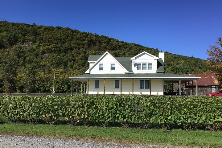 Vignoble Mont Vézeau ,oenotourisme ,visite de vignobles ,cépages ,dégustation ,Outaouais ,Sélection Vindici ,Sud du Québec ,