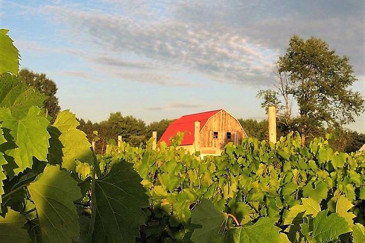 Vignoble de Pontiac Village ,oenotourisme ,visite de vignobles ,cépages ,dégustation ,Outaouais ,Sélection Vindici ,Sud du Québec ,