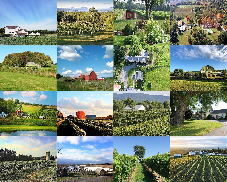 Routes du vin ,Sud du Québec ,terroir ,œnotourisme ,oenotourisme ,Sélection Vindici ,vignobles ,Basses Laurentides ,Cantons de l'Est ,Montérégie ,Outaouais ,