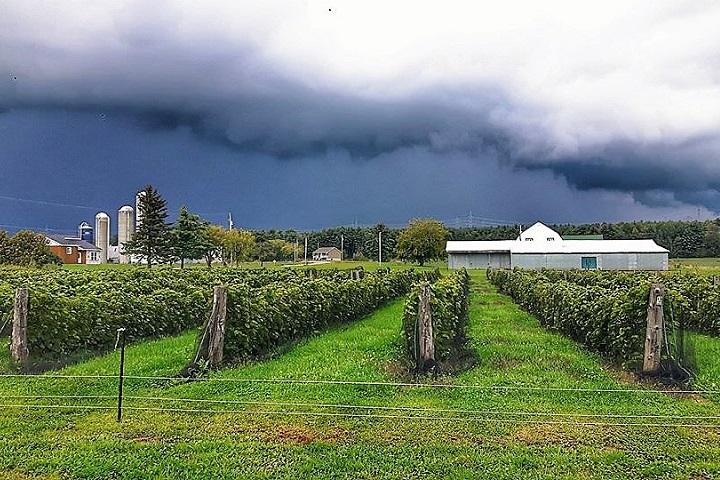 Vignoble Ste-Angélique ,oenotourisme ,visite de vignobles ,cépages ,dégustation ,Outaouais, Sélection Vindici ,Sud du Québec ,