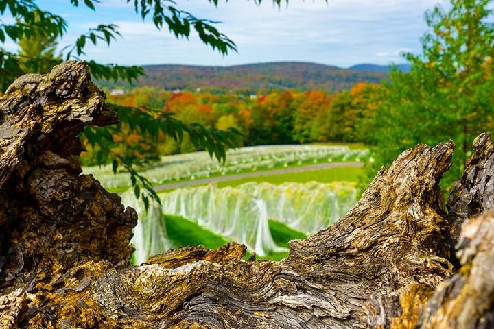 Vignoble Sugar Hill ,Cantons de l'Est ,oenotourisme ,tourisme du vin ,Sud du Québec ,Sélection Vindici ,