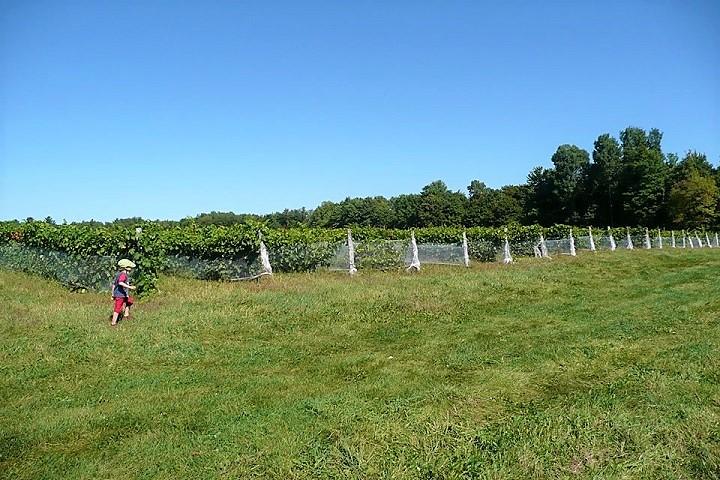 Vignoble Val Caudalies ,oenotourisme ,visite de vignobles ,cépages ,dégustation ,Cantons de l'Est, Estrie ,Sélection Vindici ,Sud du Québec ,