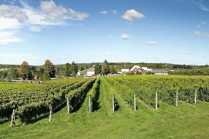 Vignoble Gagliano ,oenotourisme ,visite de vignobles ,cépages ,dégustation ,Cantons de l'Est, Estrie ,Sélection Vindici ,Sud du Québec ,