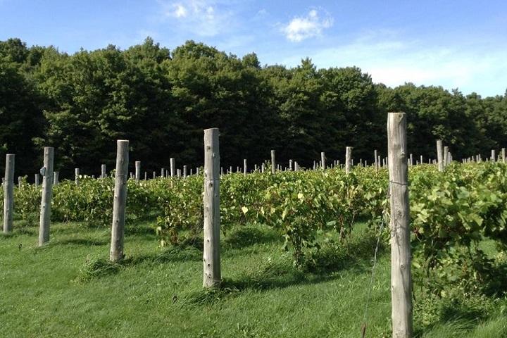 Vignoble Bromont Domaine Vitis tourisme du vin – zone viticole Brigham - Farnham Cantons de l'Est