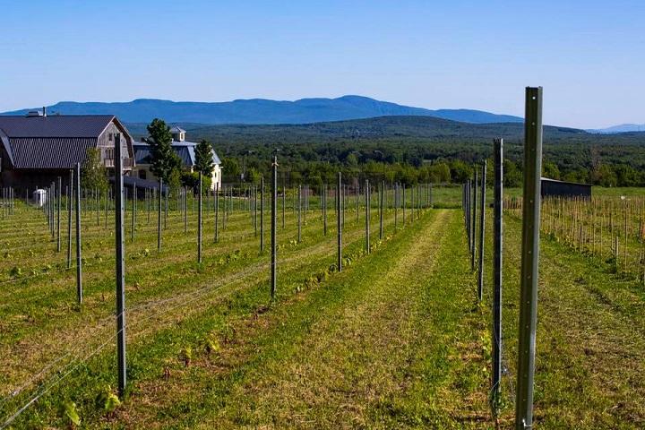 Sélection VINDICI ,Visite vignoble ,Vignoble La Belle Alliance ,Vignoble ,domaines viticoles ,Cantons de l'Est ,Vignoble ,Meilleurs restaurants ,hébergement
