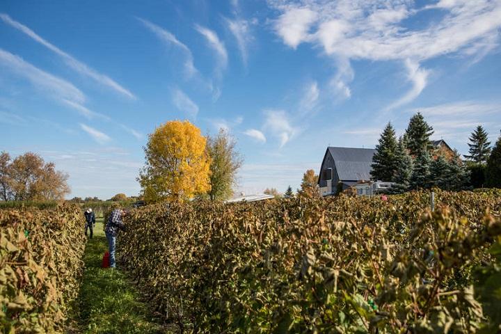 Vignoble Mouton Noir ,Montérégie ,oenotourisme ,tourisme du vin ,Sud du Québec ,sélection Vindici ,
