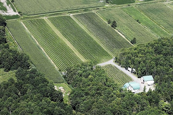 Vignoble ,Chateau de la Grange ,Varennes ,Montérégie ,tourisme du vin ,Sud du Québec ,sélection Vindici ,
