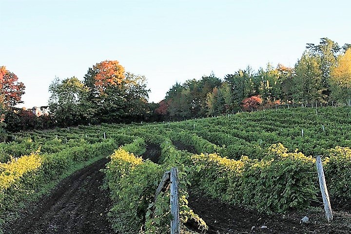 Vignoble de l'Ardennais tourisme du vin – Zone Viticole Dunham - St-Armand Cantons de l'Est