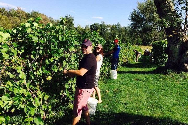Vignoble Domaine Bresee tourisme du vin – zone viticole Sutton – Lac-Brome Cantons de l'Est